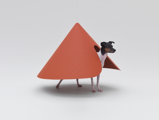 hara-design-institute - architecture for dogs - surface and surface