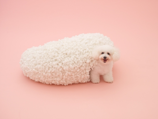 kazuyo-sejima - architecture for dogs - surface and surface
